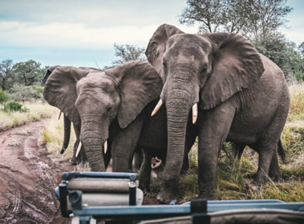 Discover South Africa on a luxury honeymoon itinerary, visiting the Cape Winelands, Cape Town and a Big Five Safari.