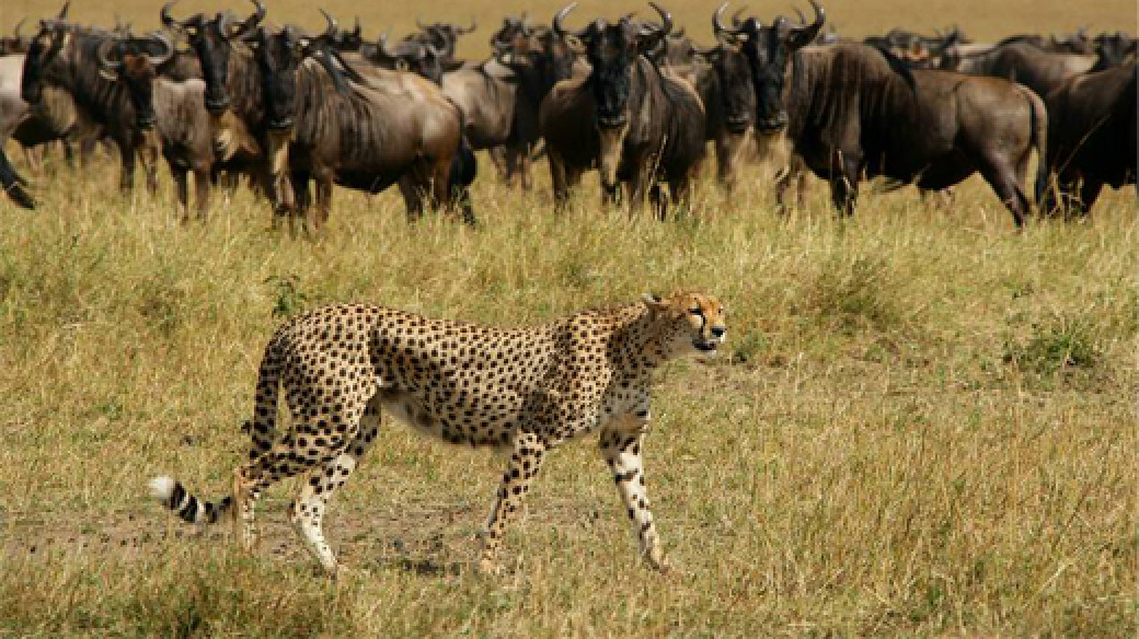 The Great Migration - Kenya