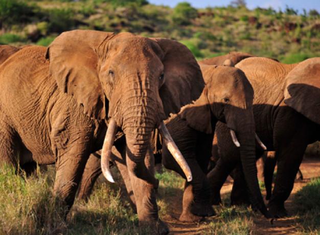 Tours to Kenya and Tanzania