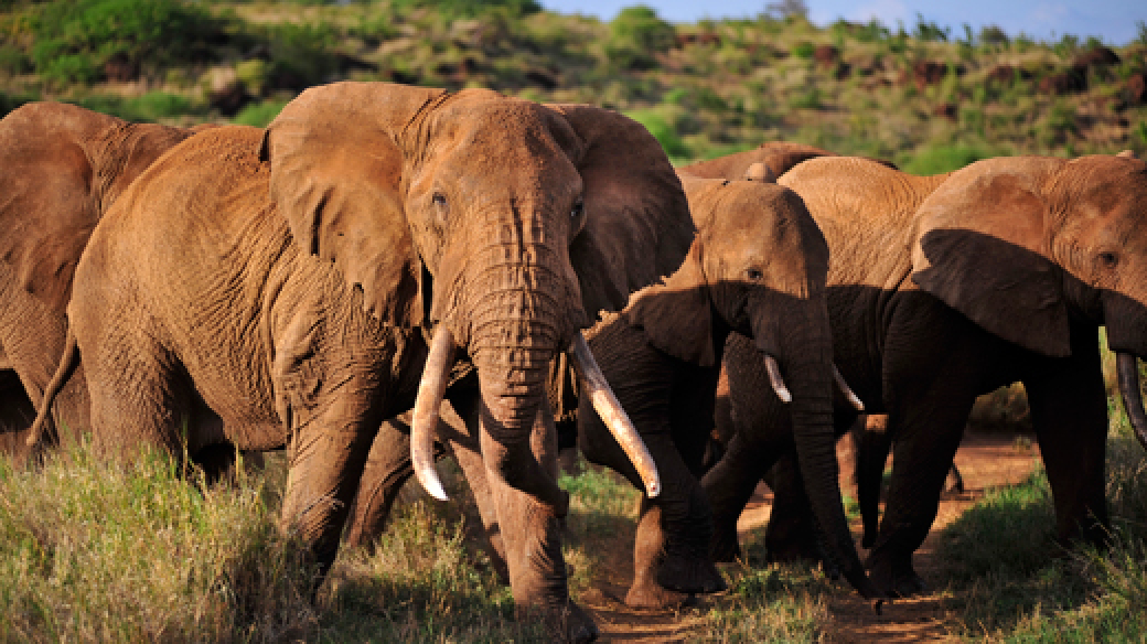 Tours to Kenya and Tanzania