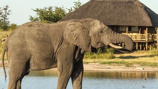 Zambezi River and Hwange Safari
