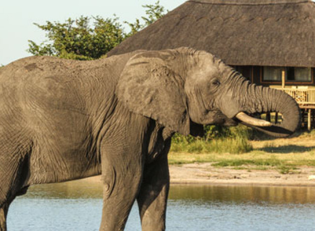 Zambezi River and Hwange Safari