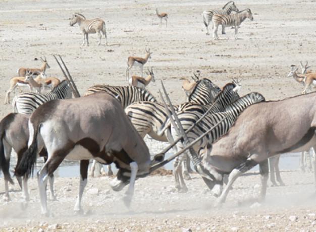 Classic Namibia Safari Tour