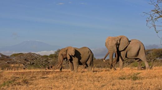 Safari School: The Areas of Africa
