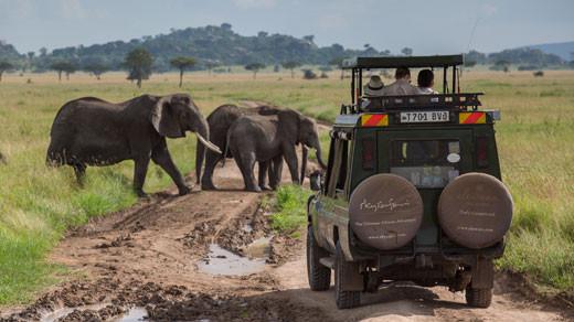 Ultimate Tanzania Safari Tour