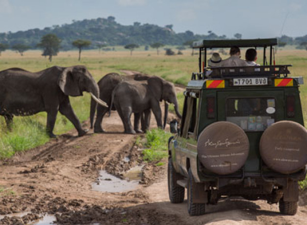 Ultimate Tanzania Safari Tour