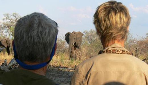 Safari in Southern Africa
