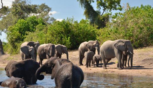 Muchenje Safari Lodge Wildlife