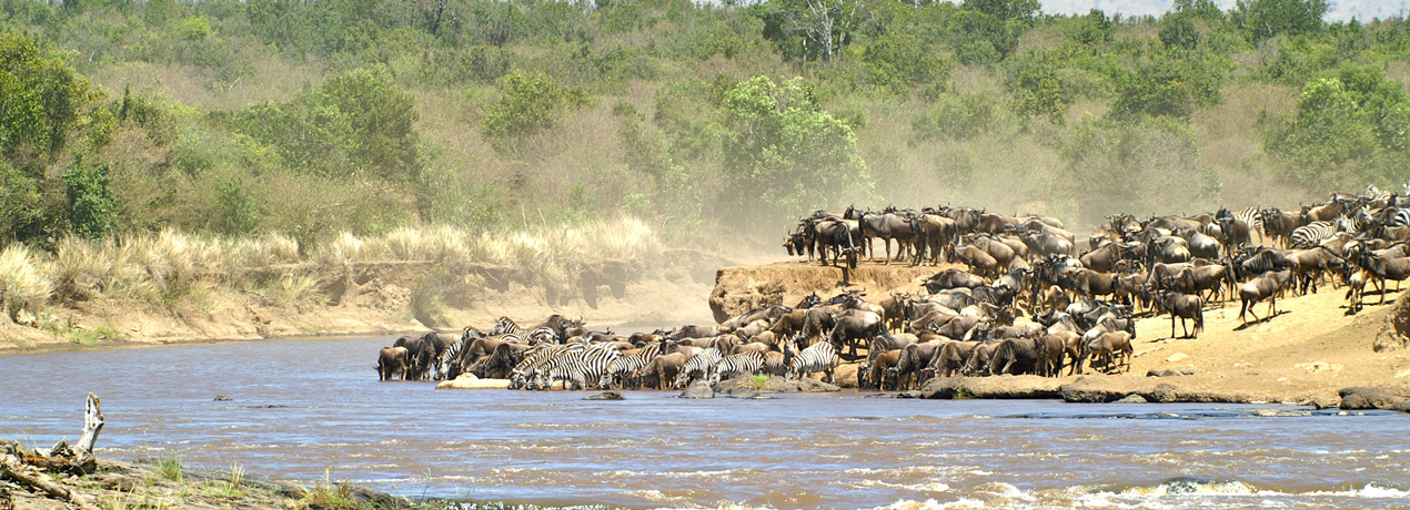 The Great Migration - River Crossing