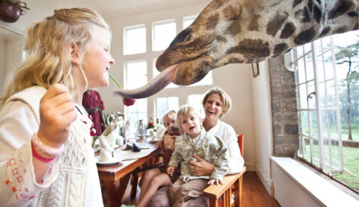 Feeding the Giraffes at Breakfast