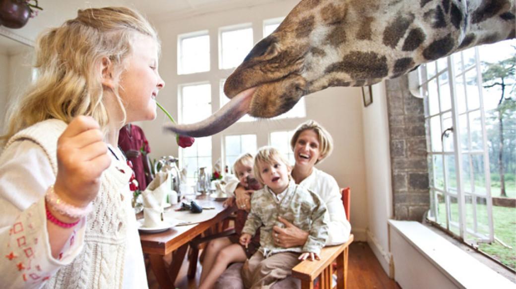 Feeding the Giraffes at Breakfast