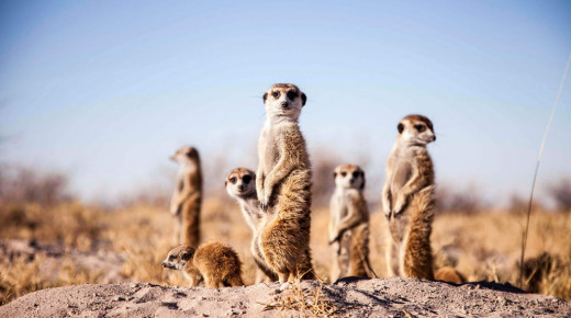 Safari School: The Animals of Africa