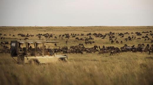 Safari School: Seasons of Travel in Africa