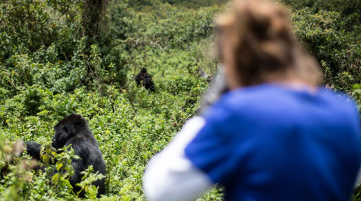 Safari School: Learn about Tracking the Gorillas