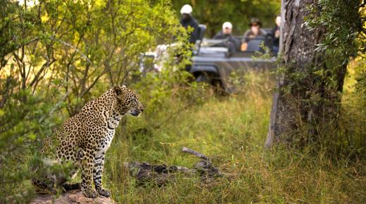 Safari-School: A Typical Day on Safari in Africa