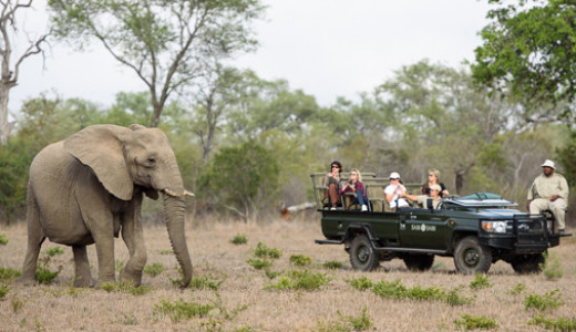Sabi Sands Safari - South Africa