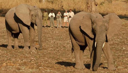 Wildlife Walking Safari Zambia