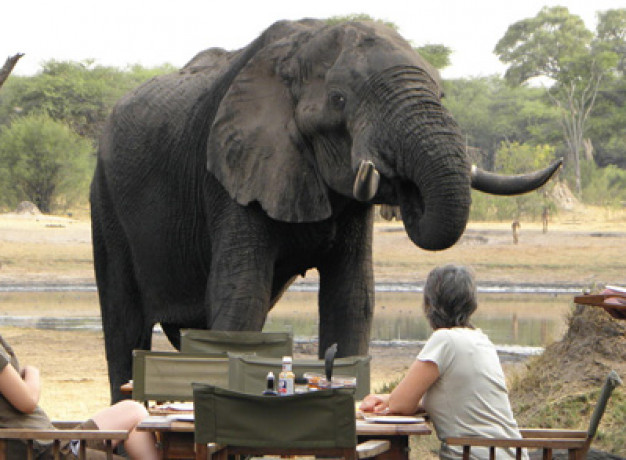 Wildlife Safari Zimbabwe