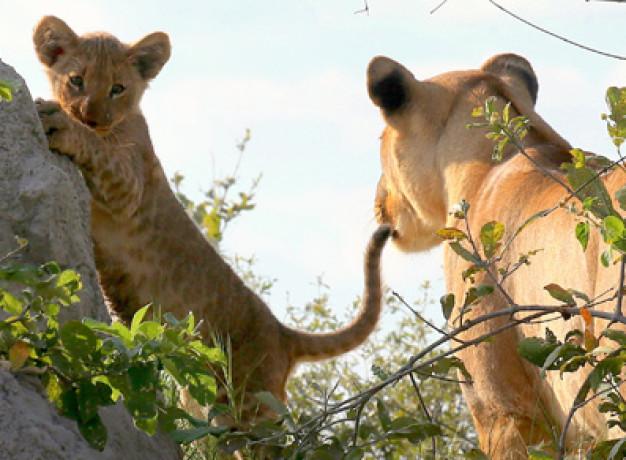 Kwando Safaris Botswana