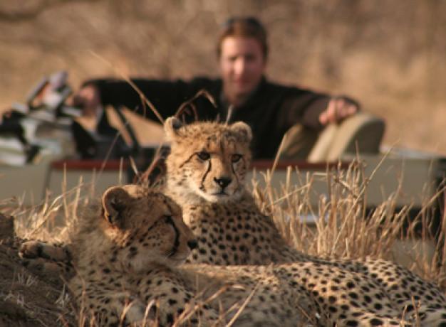 Wildlife Safari South Africa