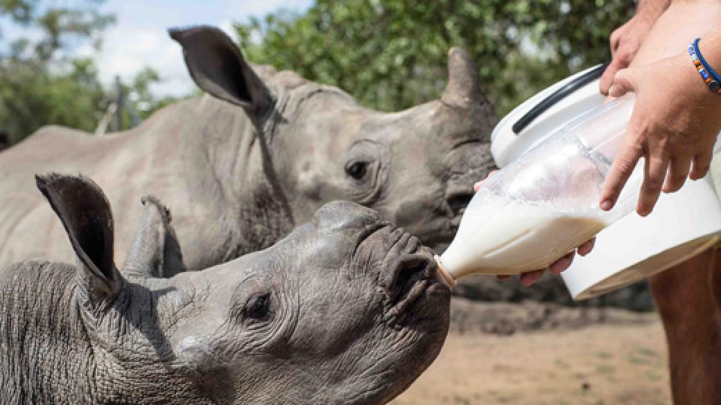 Luxury Safari Volunteering Holiday