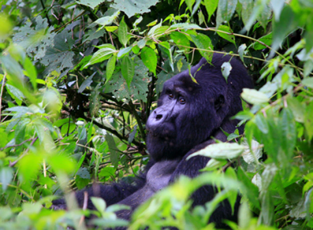 Overland Trip Gorilla Tracking