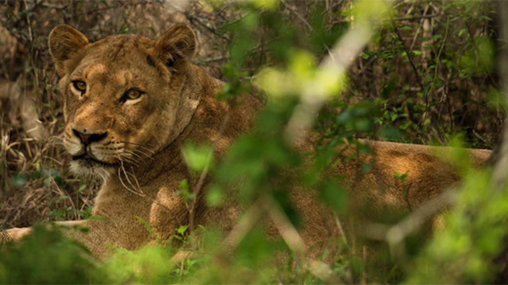 Wildlife Kruger National Park