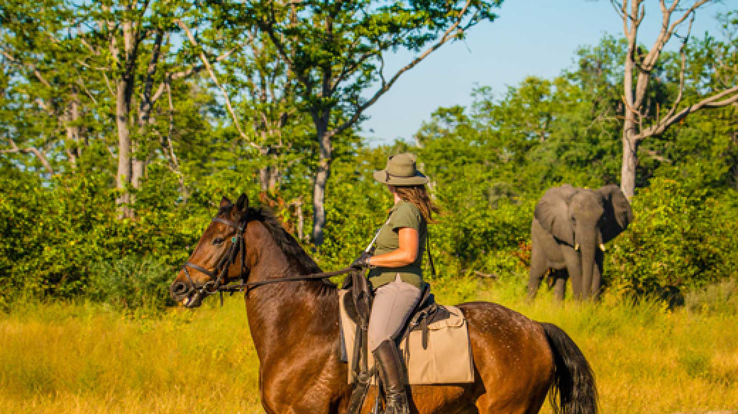 Affordable Horse Riding Botswana