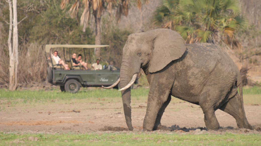 Southern Tanzania Luxury Safari
