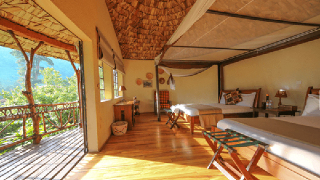 Gorilla Experience and Accommodation