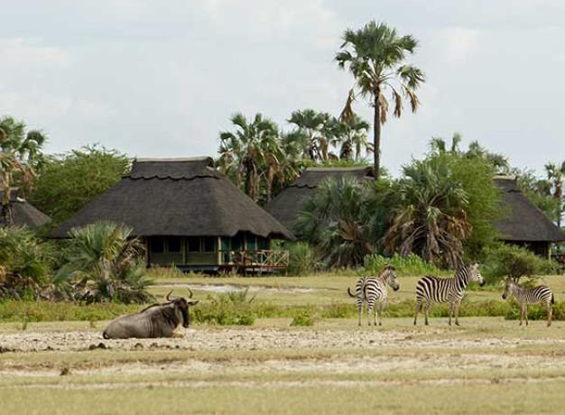 Classic Tanzania Safari Experience
