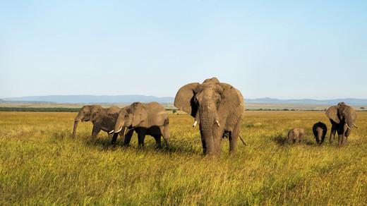 East Africa Safari Tour