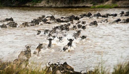 Safari Tour Wildebeest Migration