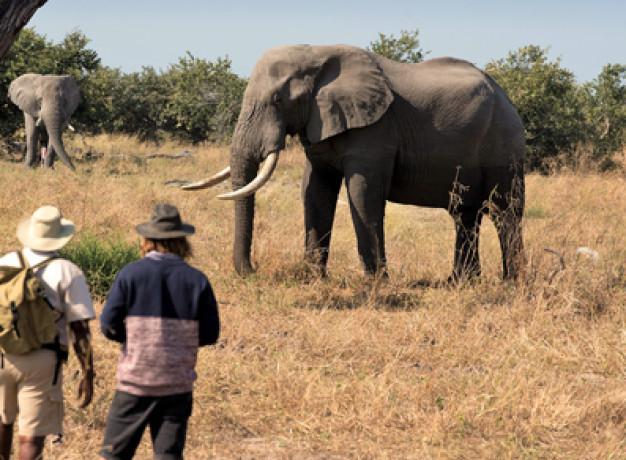 Adventure Safari Linyanti