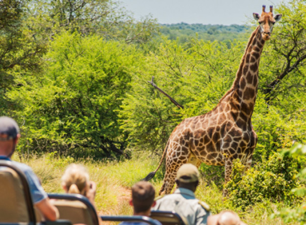 Chisomo Safari Camp Kruger