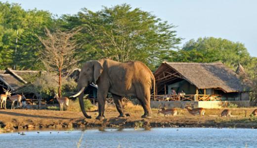 Affordable Kenyan Safari Experience
