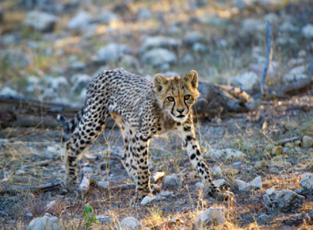 Diverse Namibia Safari Tour