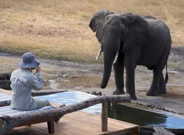 African Bush Camps Zimbawbe