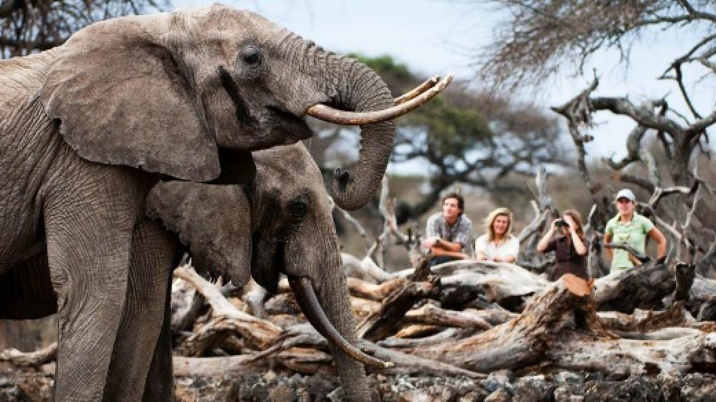 Adventure Kenya Safari