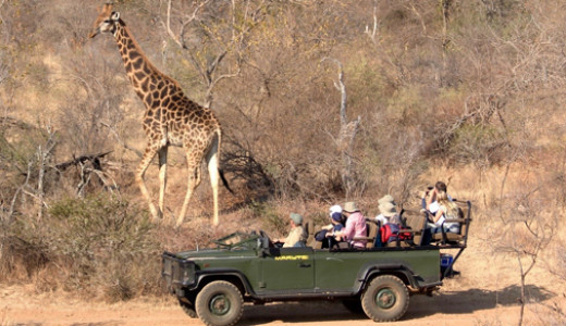 Kruger Safari South Africa