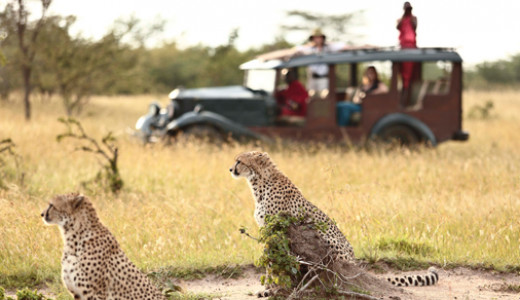 Authentic Sustainable Safari Experience