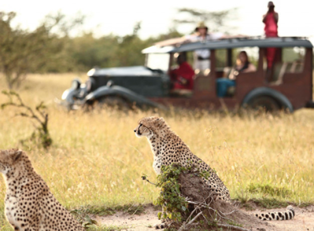 Authentic Sustainable Safari Experience