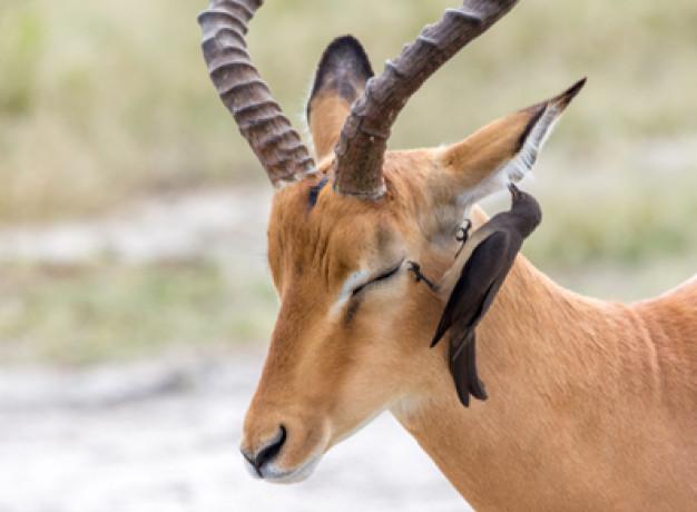 Okavango Delta Group Safari