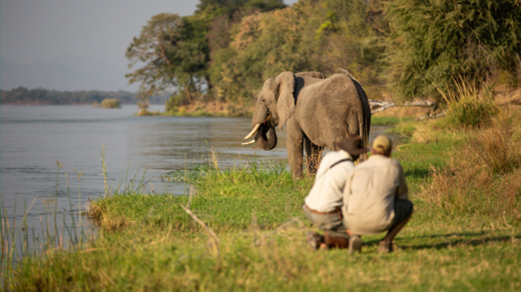 time at Sapi Springs is spent walking and exploring on foot, intermixed with wildlife drives in open vehicles that will take you to explore further into remote interior of the Sapi Reserve, in Greater Mana Pools in Zimbabwe