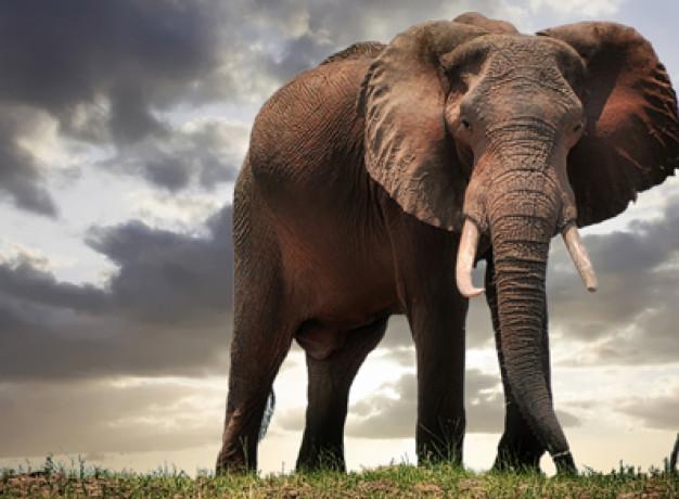 Affordable safari in Zimbabwe