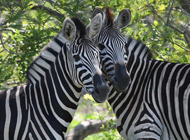 Group Tour South Africa