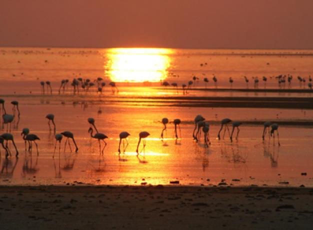 Botswana Wildlife: Flamingos at Makgadikgadi Salt Pans