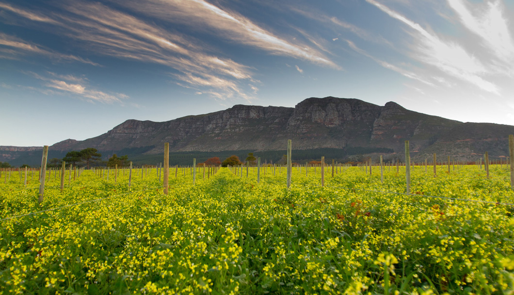 The Cape Winelands offers great opportunities for scenic wine tastings