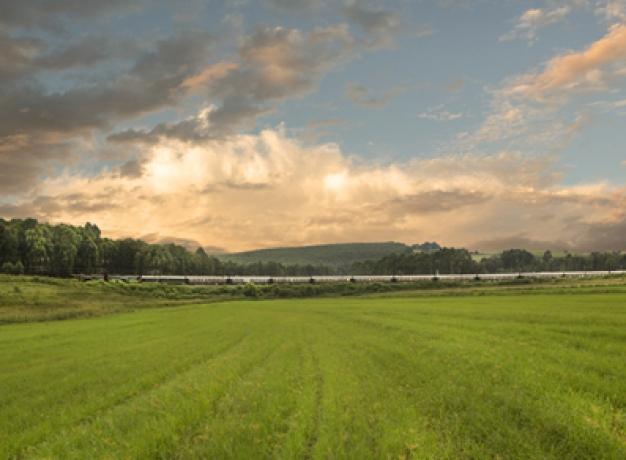 Durban Hills Meadow, Rovos Rail
