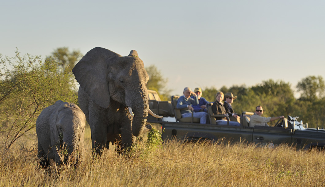 Game Drive in Sabi Sands, South Africa